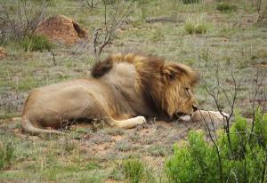 safariphoto_g1