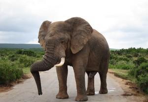 safariphoto_g4